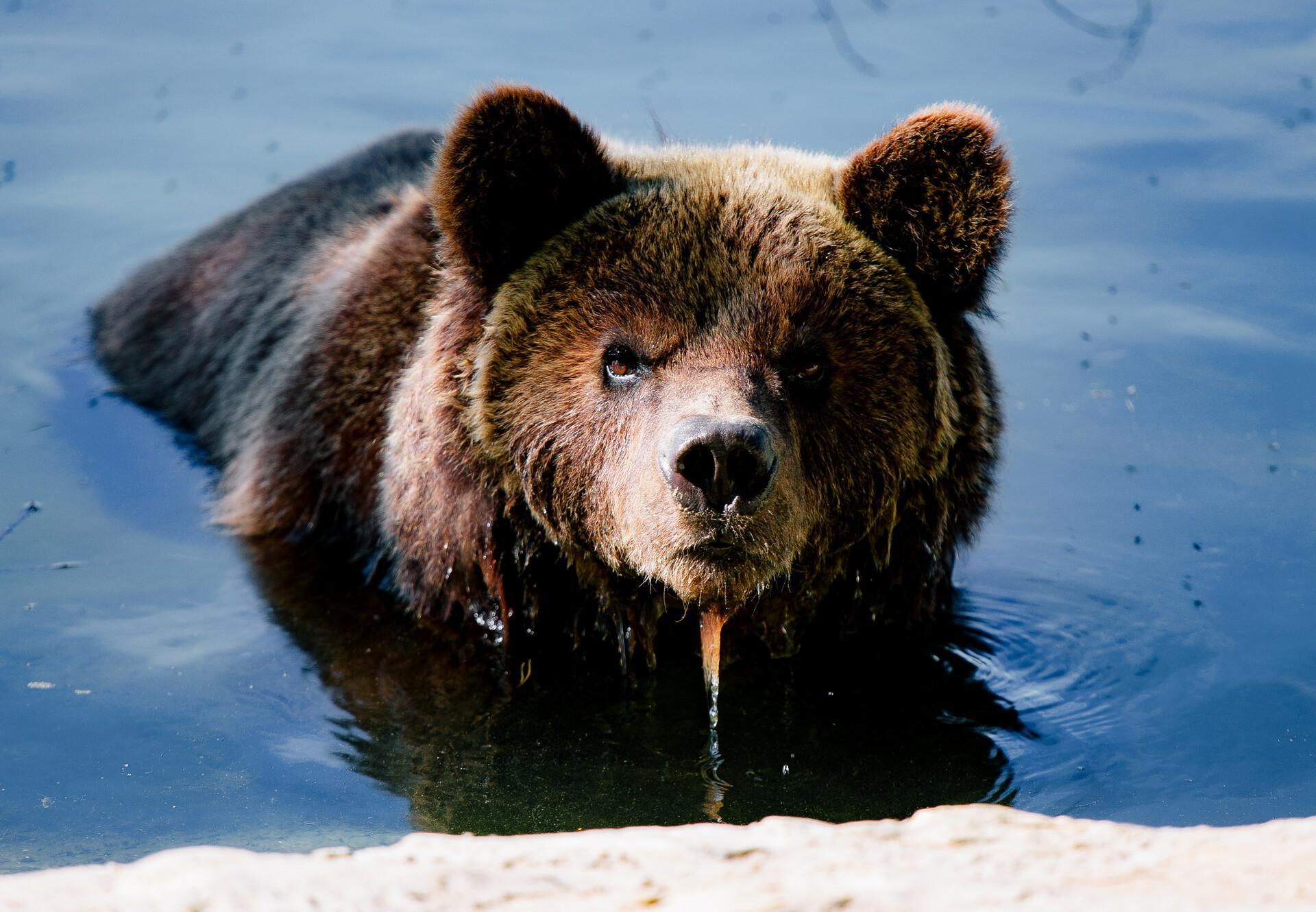 Потап вміє пробачати, або історії ведмедів із притулку «Домажир»